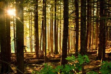sacredgrove2
